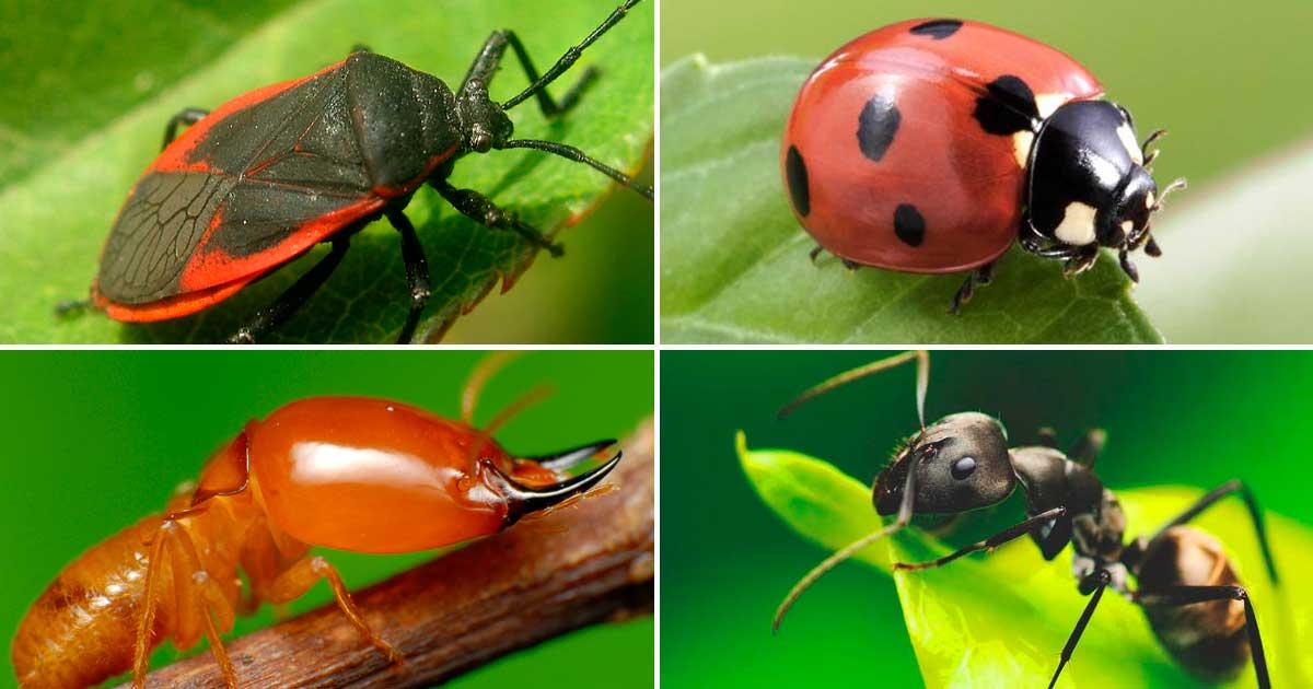diferentes-tipos-de-insectos