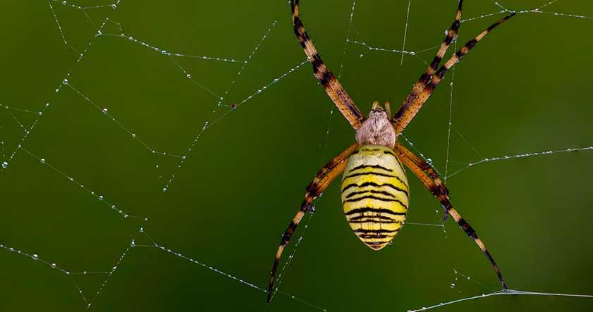 habitat de las arañas